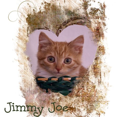 Jimmy Joe