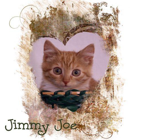 Jimmy Joe
