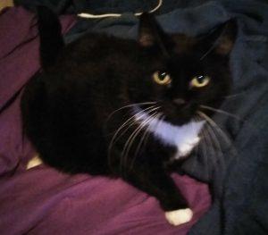 tuxedo cat named Whiskers