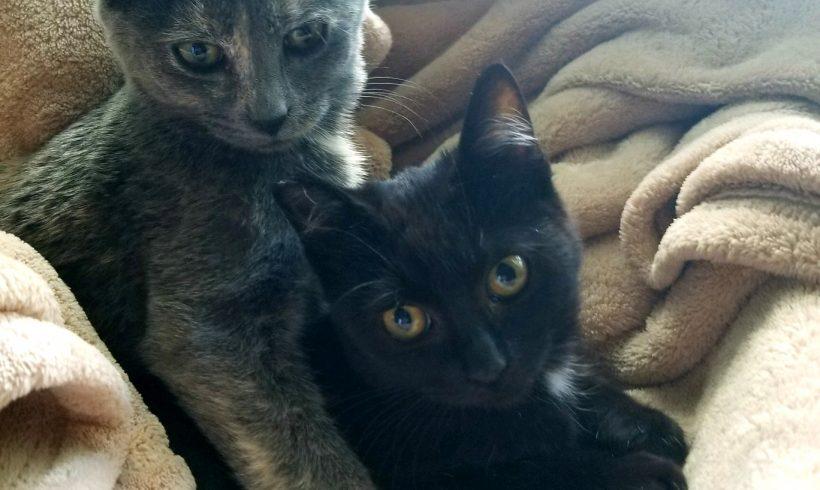 Stella and Frannie