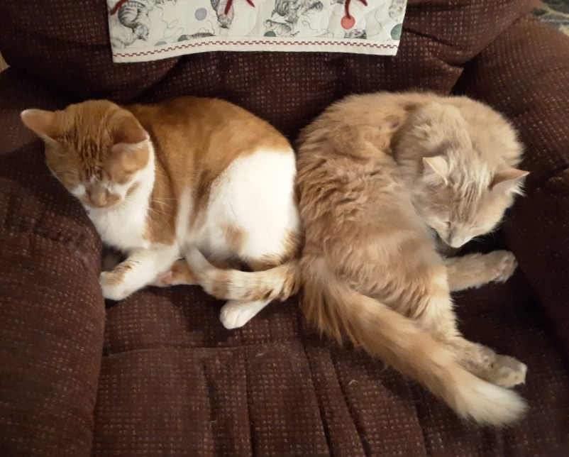 Mr. PAWS and Simon snuggled together in a brown recliner