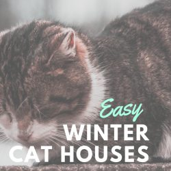 Easy DIY Winter Cat Houses