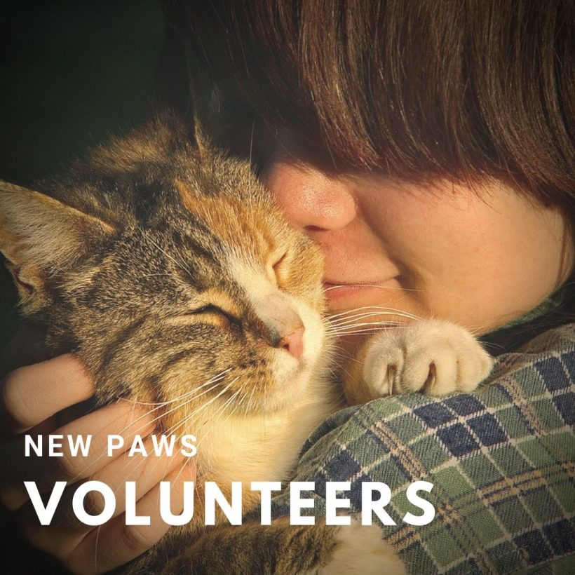 PAWS Welcomes New Volunteers