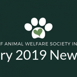 PAWS Newsletter – February 2019