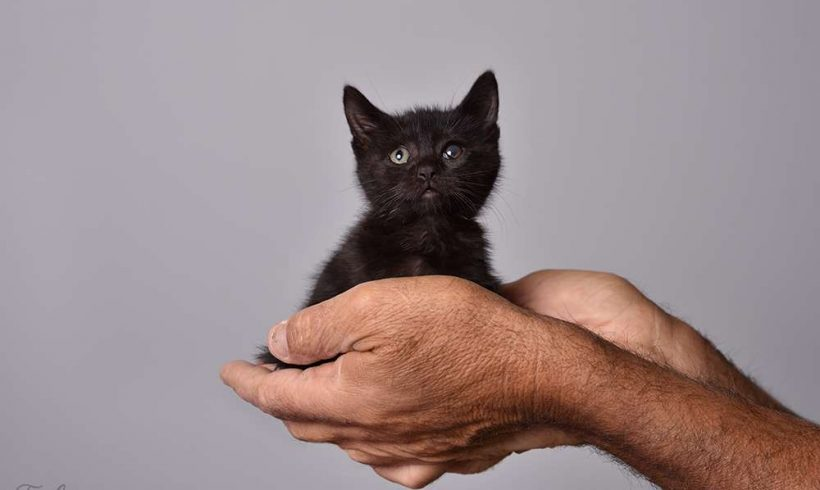 Nike; A Little Kitten With a Big Surprise