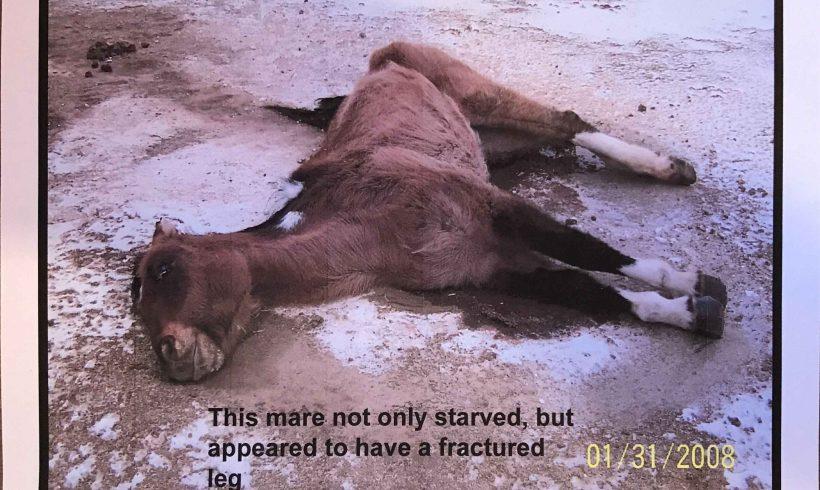 PAWS Animal Cruelty Conviction - Haggard Horse