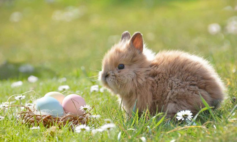 The Ugly Fate of Easter Pets